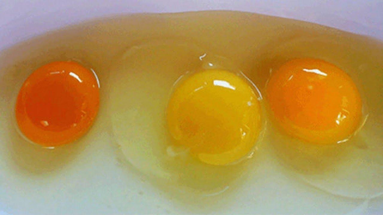 яйца для мимозы